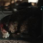 Rabbit in Jar Helix